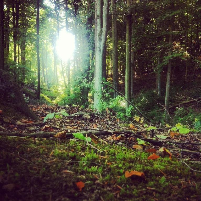 Drauß Vom Walde Komm Ich Her Ich Muss Euch Sagen Es